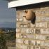 Eggy the Nest Box image