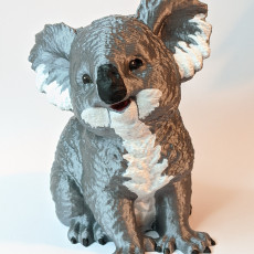 Picture of print of Koala Bear