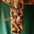 Column: Rajput Warrior image