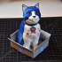 Schrodinky: British Shorthair Cat In A Box - 3D printable multipart model - multi material package print image
