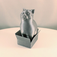 Picture of print of Schrodinky: British Shorthair Cat Sitting In A Box(single extrusion version) This print has been uploaded by Erwin Boxen