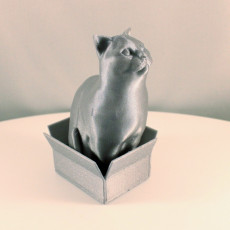 Picture of print of Schrodinky: British Shorthair Cat Sitting In A Box(single extrusion version)