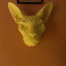 Picture of print of Sphynx Cat Wall