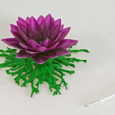 Picture of print of Lotus