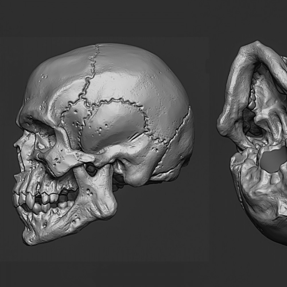 1000x1000 skull2