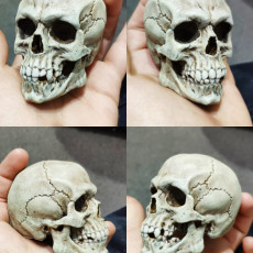 Picture of print of Free Detailed Skull This print has been uploaded by MGMaker