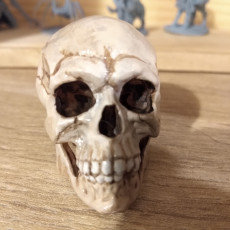 Picture of print of Free Detailed Skull
