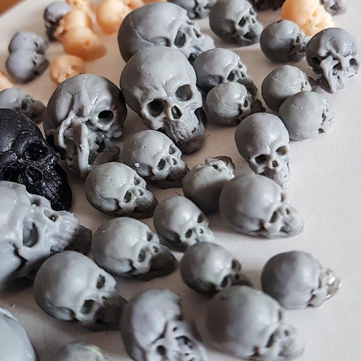 Free Detailed Skull