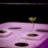 Hydroponic Plant Pot image