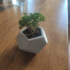 Picture of print of Dodecahedron Planter