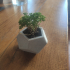 Dodecahedron Planter print image