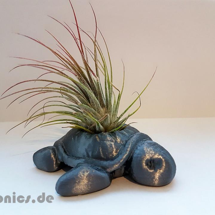 Succulent Planter Turtle