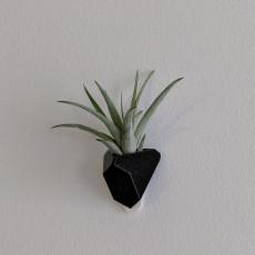 Angular succulent/air plant wall planter