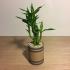 Bamboo Planter image