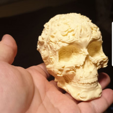 Picture of print of Fancy Skull 2 - NO SUPPORTS Этот принт был загружен Ugurcan Tanulku