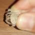 3d women face mini ring image