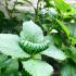 Juicy Caterpillar image