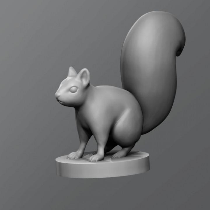 720X720-squirrel.jpg