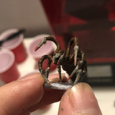 Picture of print of Sword spider