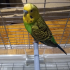 Bird perch image
