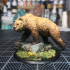 Grizzly 28mm image