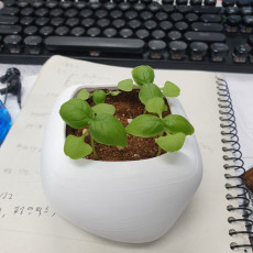 pebble shape plant