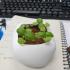 pebble shape plant image