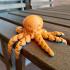 Cute Mini Octopus image