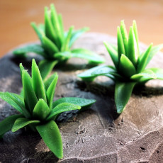 Tabletop plant: Agave
