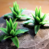 Tabletop plant: Agave image