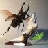 Siamese rhinoceros beetle image