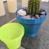 generic cactus plant pot image