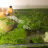Hamburger Mattenfilter + Tschechischer Luftheber (Filter+Airlift for aquarium) image
