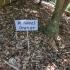Garden plant labels image