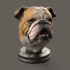 English Bulldog image