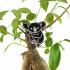 Koala brooch image