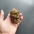 Zombie head image