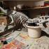 T-Rex Skeleton - Leo Burton Mount image