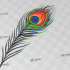Peacock Feather image