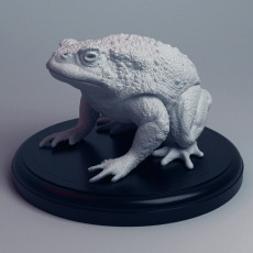 Realistic Toad