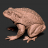 Realistic Toad image