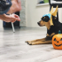 A creative dog Halloween mask designed in SelfCAD image