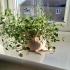 Alien Flower Pot image