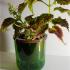 Ludicrously parametric planter image