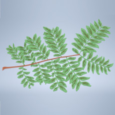 Pinnate Leaf Branch