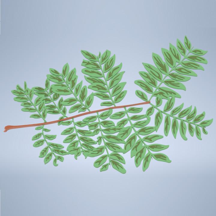 Pinnate Leaf Branch