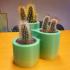 Cactus pot x3 image