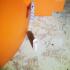 House martin/Swallow nest concrete mold image