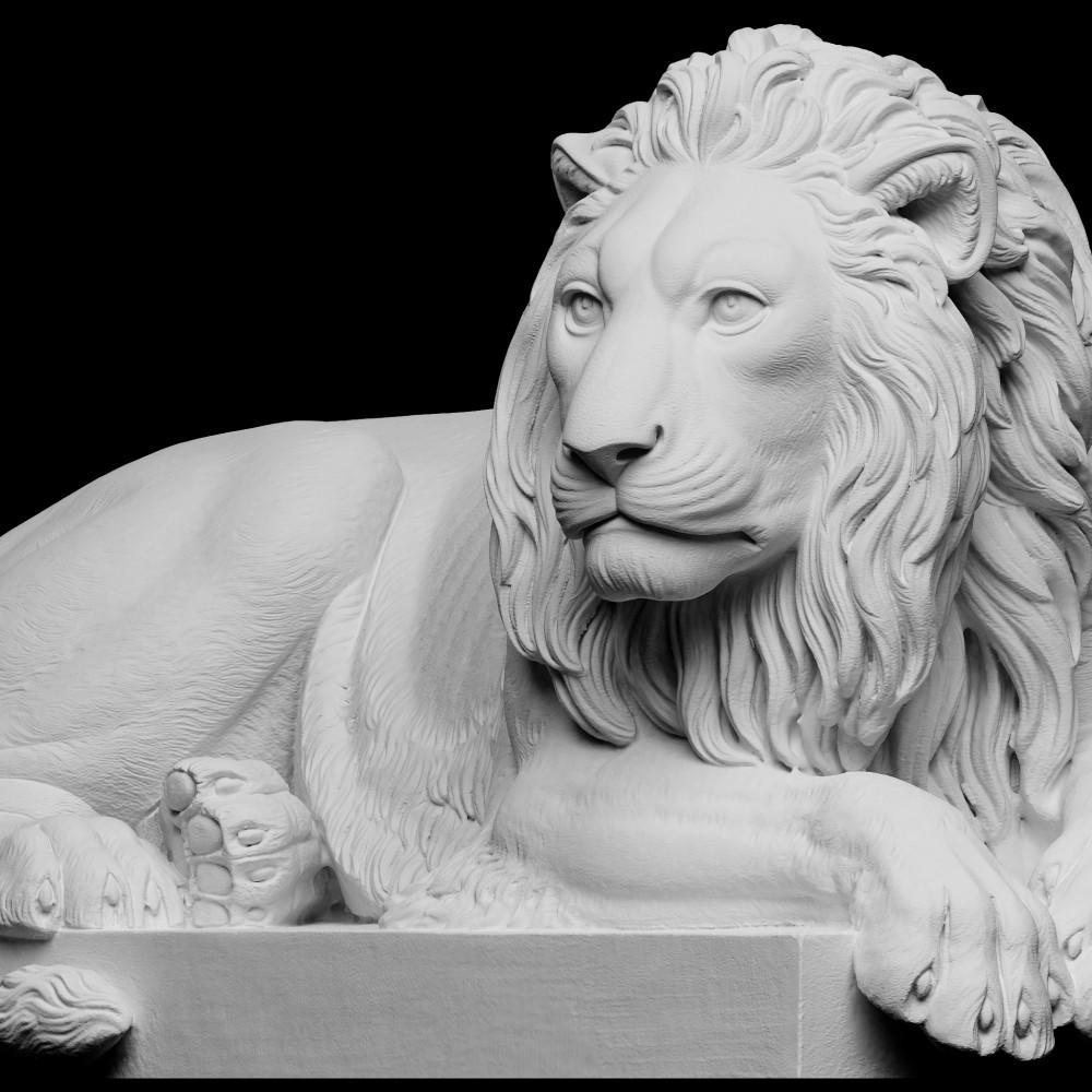1000x1000 lion2