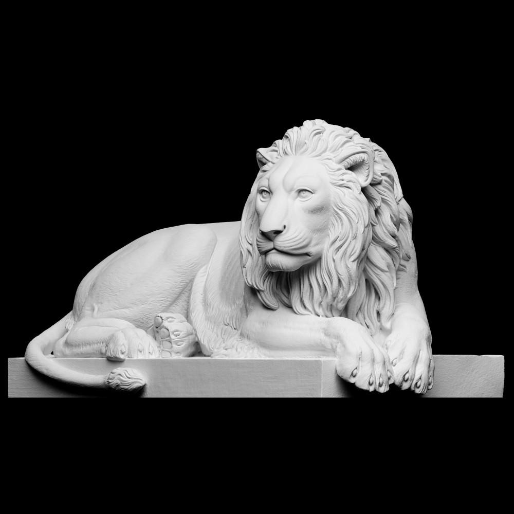 1000x1000 lion3
